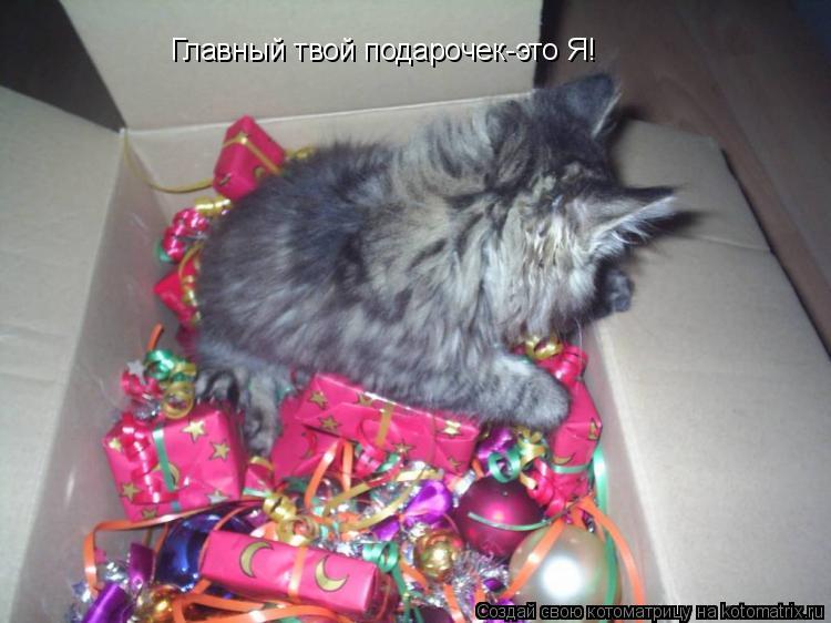 Котоматрица: Главный твой подарочек-это Я!