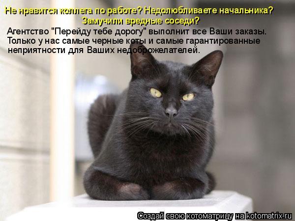 Самые красивые картинки котов, кошек, котят.