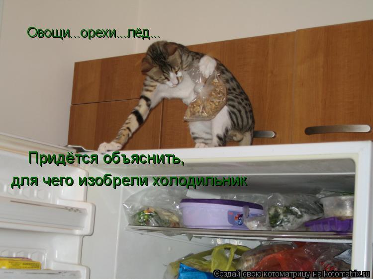 Котоматрица: Овощи...орехи...лёд... Придётся объяснить, для чего изобрели холодильник