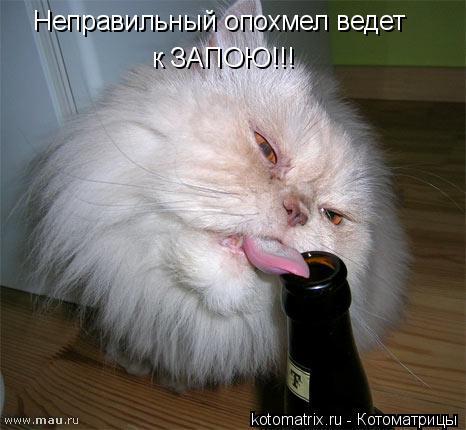 Котоматрица: Неправильный опохмел ведет  к ЗАПОЮ!!!