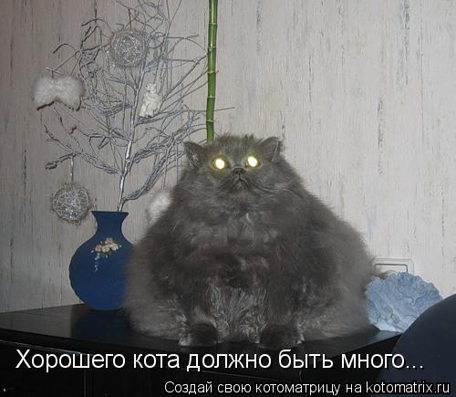 Котоматрица: Хорошего кота должно быть много...