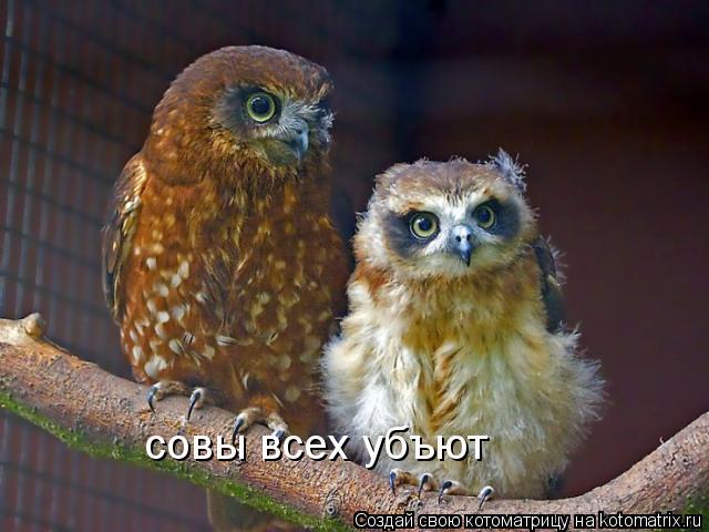 Котоматрица: совы всех убъют