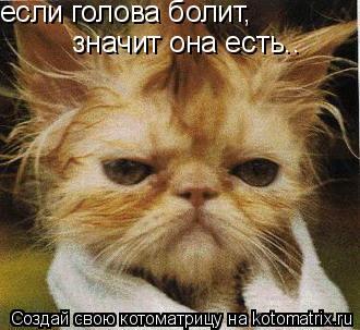 Котоматрица: если голова болит,  значит она есть..