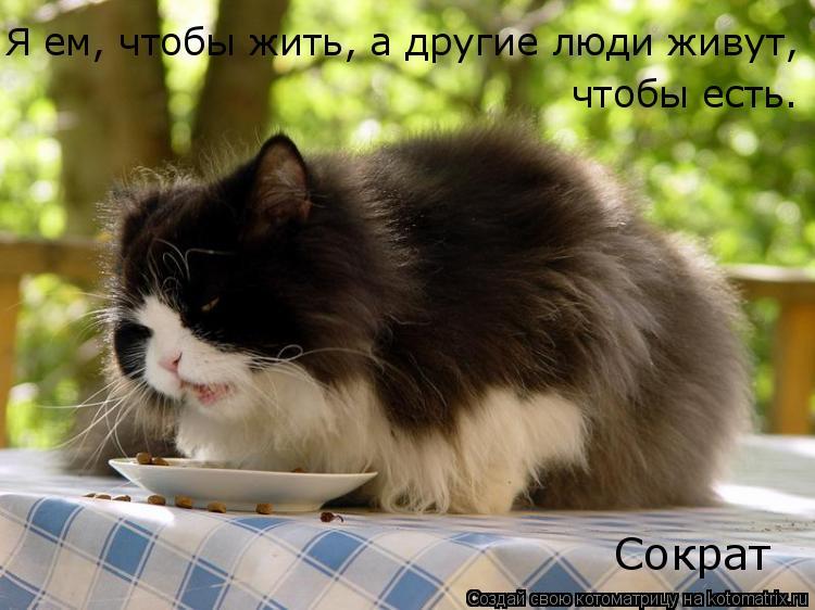 Котоматрица: Я ем, чтобы жить, а другие люди живут, чтобы есть. Сократ