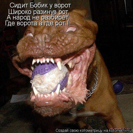 Котоматрица: Сидит Бобик у ворот Широко разинув рот, А народ не разбирёт, Где ворота а где рот !