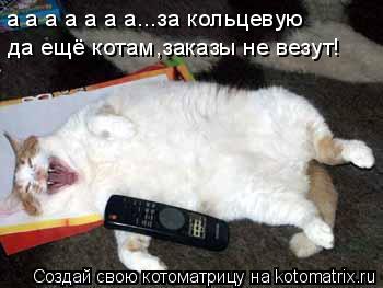 Котоматрица: а а а а а а а...за кольцевую да ещё котам,заказы не везут!