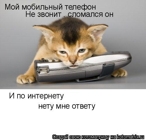 Котоматрица: Мой мобильный телефон  Не звонит — сломался он И по интернету нету мне ответу