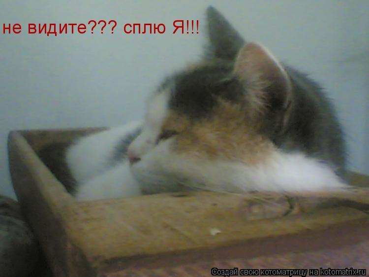 Котоматрица: не видите??? сплю Я!!!