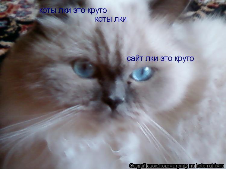 Котоматрица: коты лки коты лки это круто сайт лки это круто