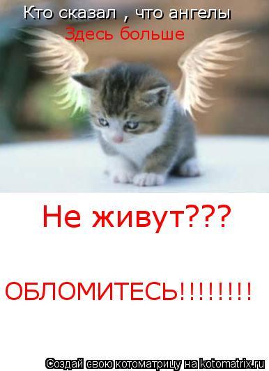 Котоматрица: Кто сказал , что ангелы Здесь больше Не живут??? ОБЛОМИТЕСЬ!!!!!!!!
