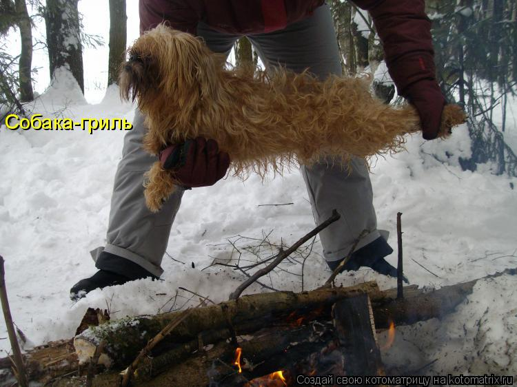 Котоматрица: Собака-гриль