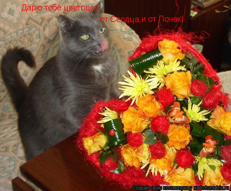 Котоматрица: Дарю тебе цветоцек от Сердца ,и от Почек!