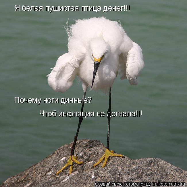 Котоматрица: Я белая пушистая птица денег!!! Почему ноги динные? Чтоб инфляция не догнала!!!