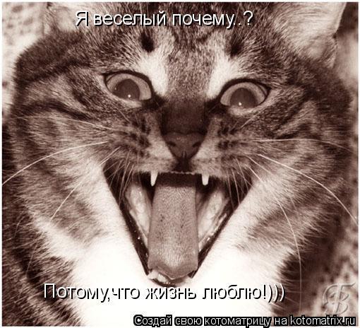 Котоматрица: Я веселый почему..? Потому,что жизнь люблю!)))