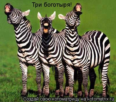 Котоматрица: Три боготыря!