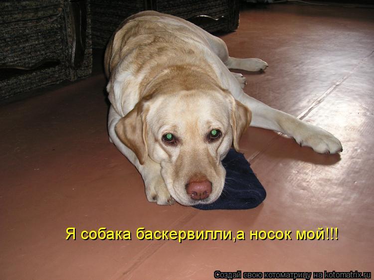 Котоматрица: Я собака баскервилли,а носок мой!!!