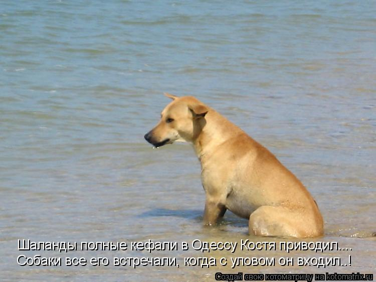 Котоматрица: Шаланды полные кефали в Одессу Костя приводил.... Собаки все его встречали, когда с уловом он входил..!