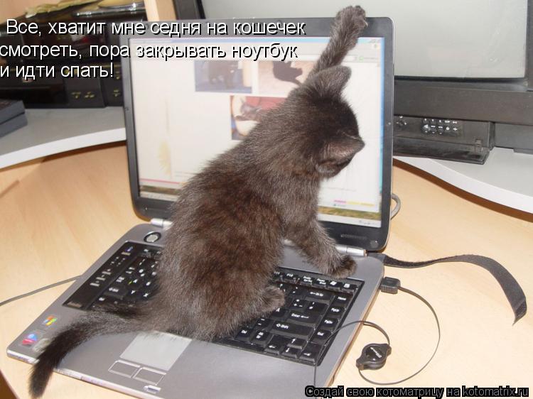 Котоматрица: Все, хватит мне седня на кошечек смотреть, пора закрывать ноутбук и идти спать!