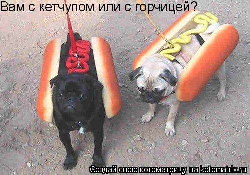 Котоматрица: Вам с кетчупом или с горчицей?