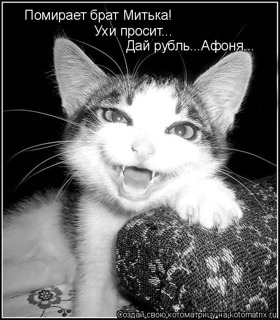 Котоматрица: Помирает брат Митька! Ухи просит... Дай рубль...Афоня...