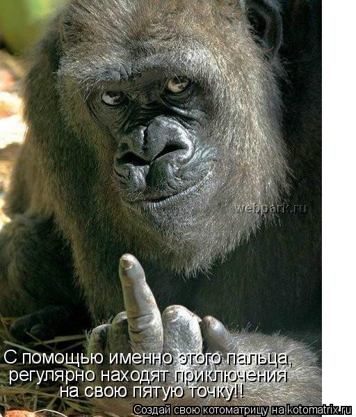 Котоматрица: С помощью именно этого пальца,  регулярно находят приключения на свою пятую точку!! на свою пятую точку!!