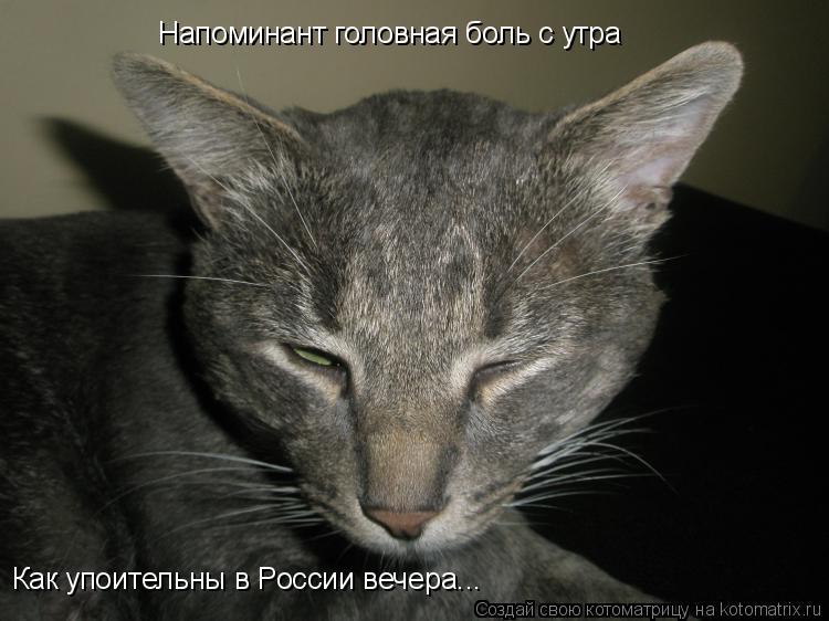 Котоматрица: Напоминант головная боль с утра Как упоительны в России вечера...