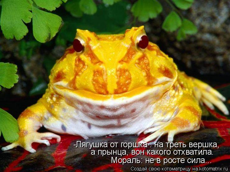 Котоматрица: -Лягушка от горшка – на треть вершка,   а прынца, вон какого отхватила.    Мораль: не в росте сила...