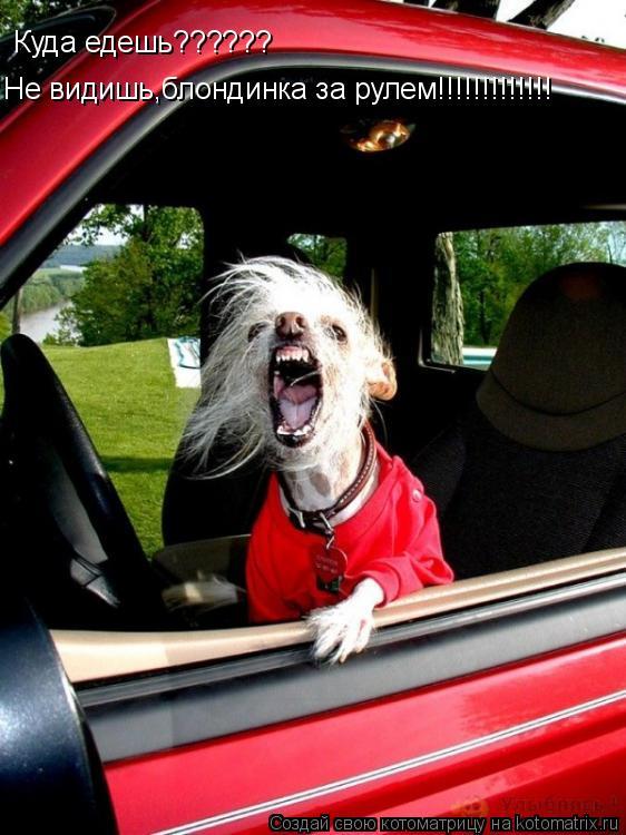 Котоматрица: Куда едешь?????? Не видишь,блондинка за рулем!!!!!!!!!!!!!