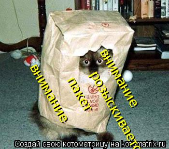 Котоматрица: внимание внимание розыскивается пакет