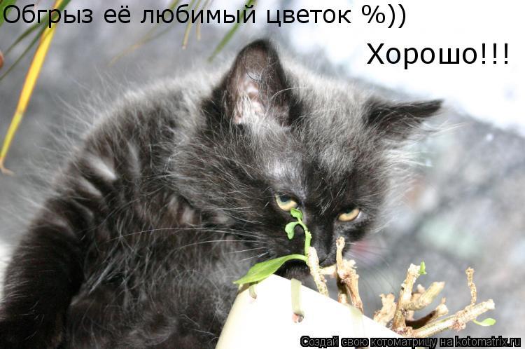 Котоматрица: Обгрыз её любимый цветок %)) Хорошо!!!