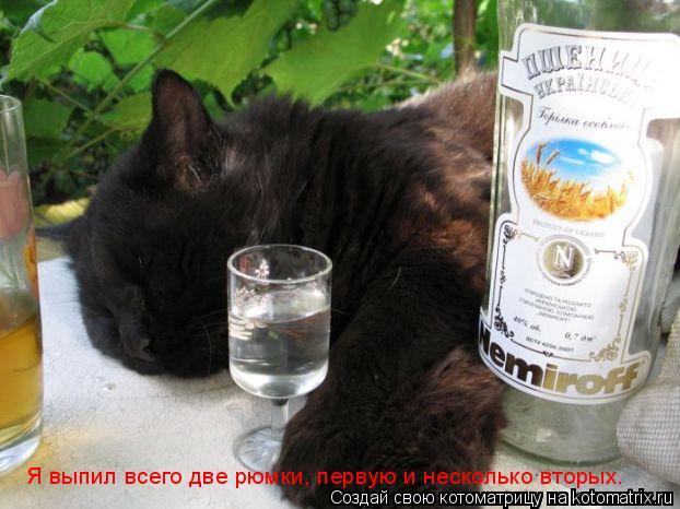Котоматрица: Я выпил всего две рюмки, первую и несколько вторых.
