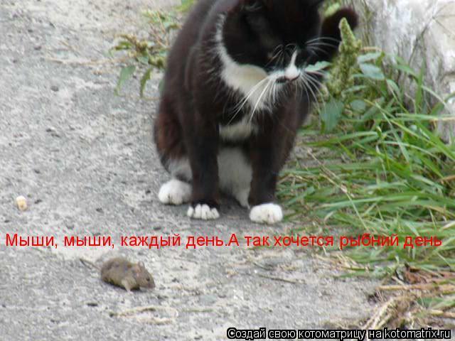 Котоматрица: Мыши, мыши, каждый день.А так хочется рыбний день Мыши, мыши, каждый день.А так хочется рыбний день