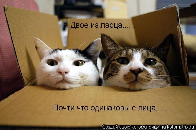 Котоматрица: Двое из ларца...... Почти что одинаковы с лица......