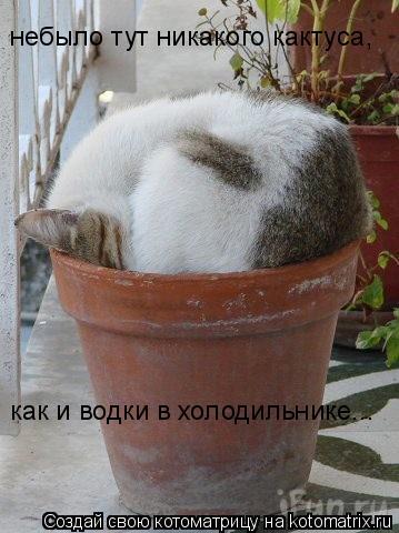 Котоматрица: небыло тут никакого кактуса, как и водки в холодильнике...
