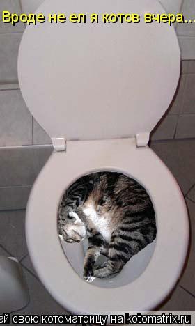 Котоматрица: Вроде не ел я котов вчера...