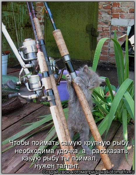 Котоматрица: Чтобы поймать самую крупную рыбу,  необходима удочка, а   рассказать,  какую рыбу ты поймал,   нужен талант.