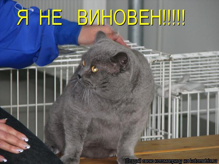 Котоматрица: Я  НЕ   ВИНОВЕН!!!!!