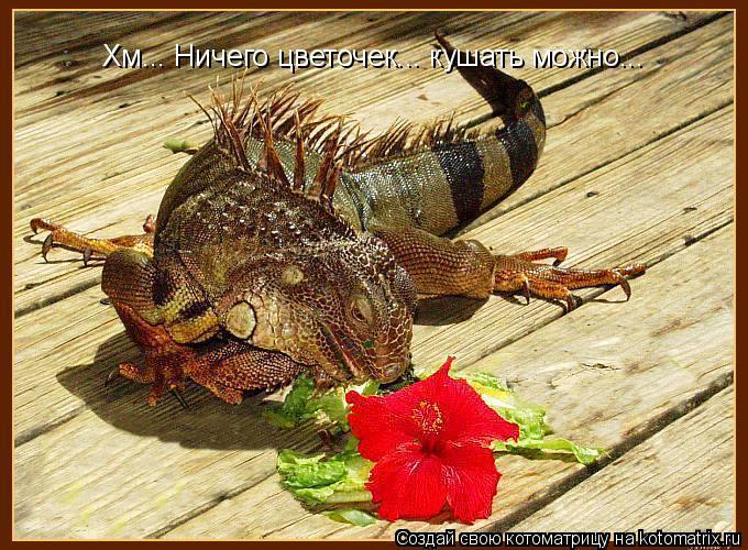 Котоматрица: Хм... Ничего цветочек... кушать можно...