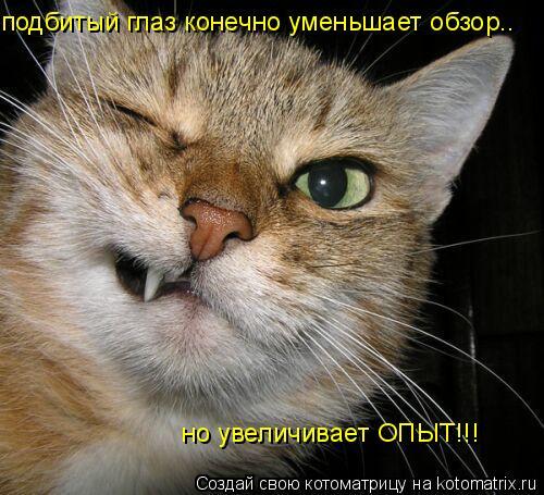 Котоматрица: но увеличивает ОПЫТ!!! подбитый глаз конечно уменьшает обзор..