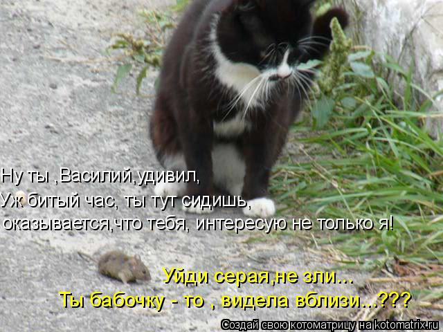 Котоматрица: Ну ты ,Василий,удивил, Уж битый час, ты тут сидишь, оказывается,что тебя, интересую не только я! Уйди серая,не зли... Ты бабочку - то , видела вбл