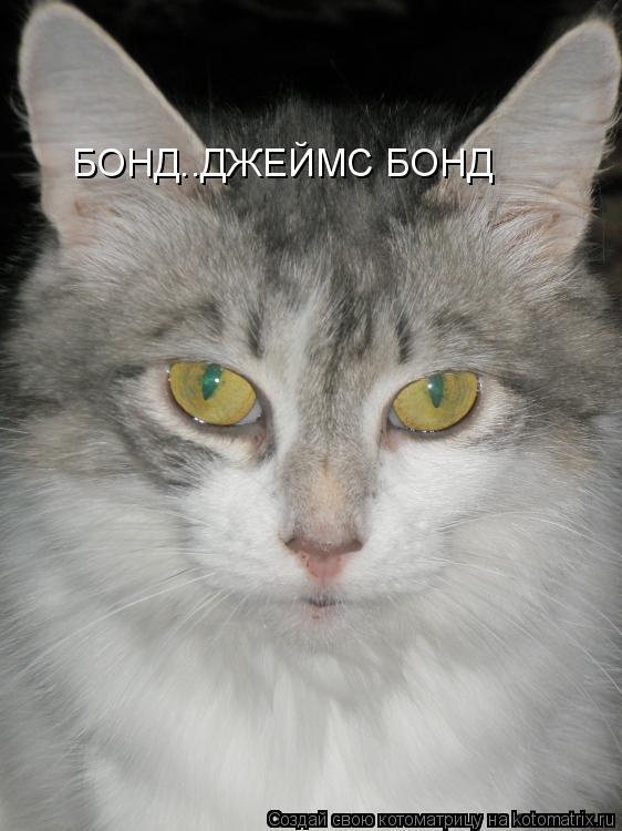 Котоматрица: БОНД..ДЖЕЙМС БОНД