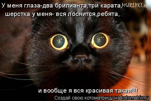 Котоматрица: У меня глаза-два брилианта,три карата, шерстка у меня- вся лоснится,ребята, и вообще я вся красивая такая!!!