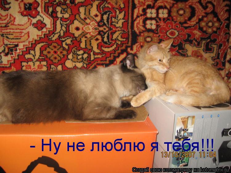 Котоматрица: - Ну не люблю я тебя!!!