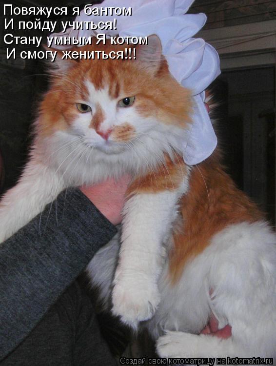 Котоматрица: Повяжуся я бантом И пойду учиться! Стану умным Я котом И смогу жениться!!!