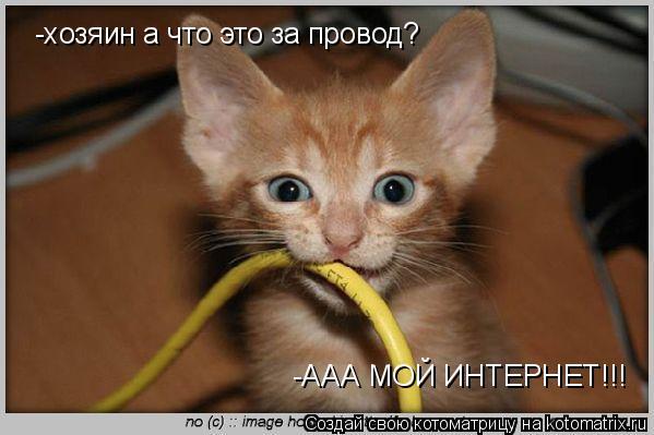 Котоматрица: -хозяин а что это за провод? -ААА МОЙ ИНТЕРНЕТ!!!