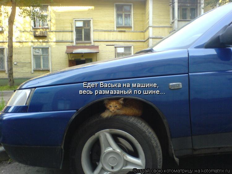 Котоматрица: Едет Васька на машине, весь размазаный по шине...