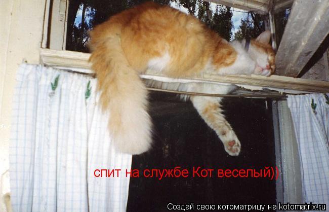 Котоматрица: спит на службе Кот веселый))