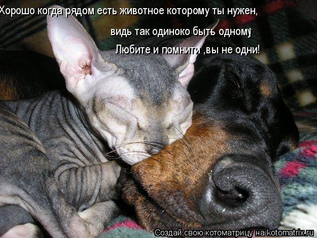 Котоматрица: Хорошо когда рядом есть животное которому ты нужен, видь так одиноко быть одному Любите и помнити ,вы не одни! !