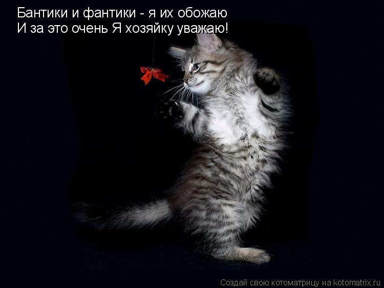 Котоматрица: Бантики и фантики - я их обожаю И за это очень Я хозяйку уважаю!