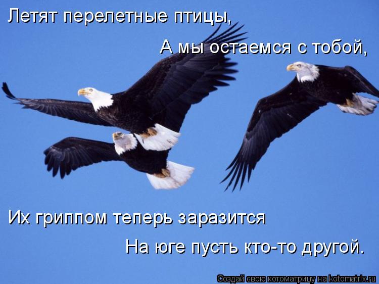 Котоматрица: Летят перелетные птицы, А мы остаемся с тобой, Их гриппом теперь заразится На юге пусть кто-то другой.